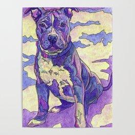 Rainbow Blue Nose Pitbull Poster