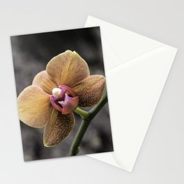 Orange Orchid Stationery Cards