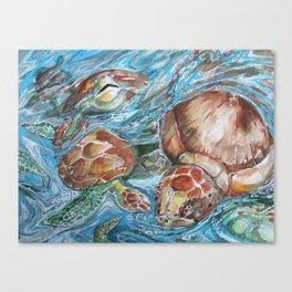 Sea Turtles Canvas Print
