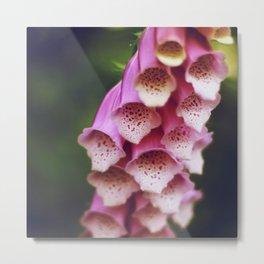 Pink Foxglove Metal Print
