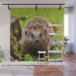 Cute Little Hedgehog Wall Mural