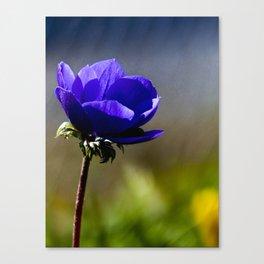 The blue Flower Canvas Print