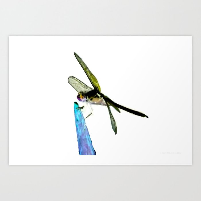 """""""Icy Dragonfly"""" Art Print"""