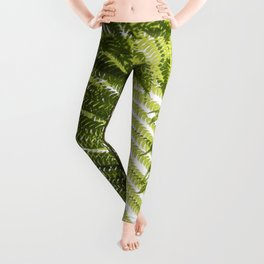 House Plant Fern Leaf Silhouette Sunlight Zen Photo Leggings