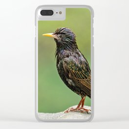 European Starling in Central Park Clear iPhone Case