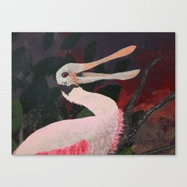 Laughing spoonbill Canvas Print