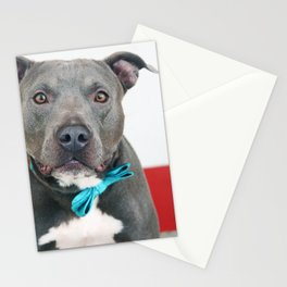 Handsome Blue Pitbull Stationery Cards