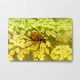 The Little Beatle Metal Print