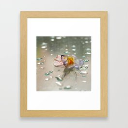 miss clapham's wild crocus Framed Art Print