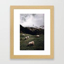 Sheep II / Bavarian Alps Framed Art Print