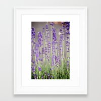 lavender Framed Art Prints featuring Lavender by A Wandering Soul