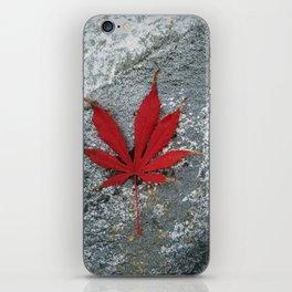 Japanese maple leaf on Rock iPhone Skin