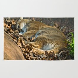 Sleeping Mountain Lion Rug