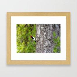Red Head Bird Framed Art Print