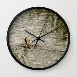 Young Mallard Wall Clock
