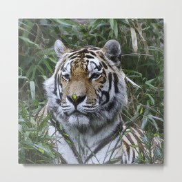 CArt Tiger 10 Metal Print