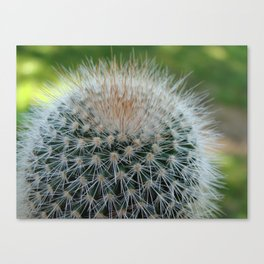 Cactus Cynara Cardunculus Canvas Print
