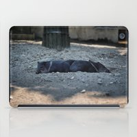 pigs iPad Cases featuring Little pigs by DB.Photography