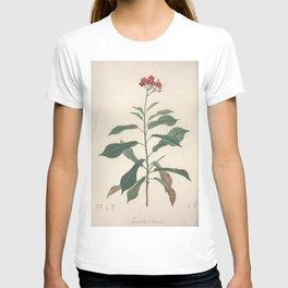 jatropha acuminata Redoute Roses 3 T-shirt