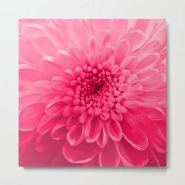 Chrysanthemum pink Metal Print