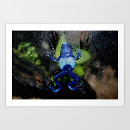 Poison Dart Frog Belly- Dendrobates Azureus Art Print