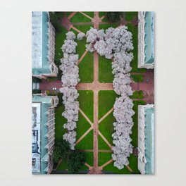 UW Cherry Blossoms: Spring Canvas Print