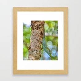 Small Cayman Lizard Framed Art Print