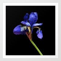 iris Art Prints featuring Iris by Artemio Studio