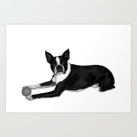 Fetch Boston Terrier B/W Art Print
