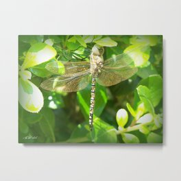 Stainglass Dragonfly Metal Print