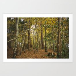 Fairy Woods Art Print