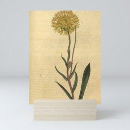 Flower 956 scalia jaceoides Knap weed Scalia10 Mini Art Print