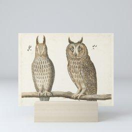 Owls Natural History Illustration, 16th Century Mini Art Print