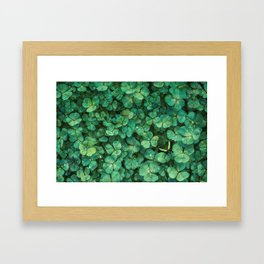 Lucky Green Clovers, St Patricks Day pattern Framed Art Print