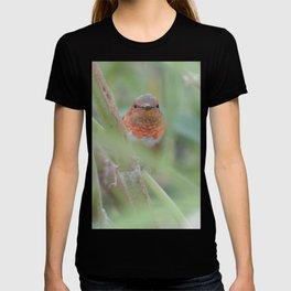 An Allen's Hummingbird Amid Mexican Sage T-shirt