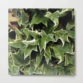 Variegated Ivy Metal Print