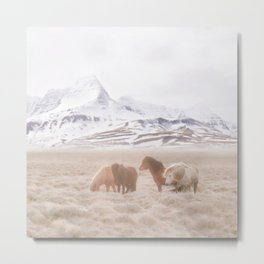 WILD AND FREE 3 - HORSES OF ICELAND Metal Print