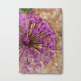 Single Purple Allium Metal Print