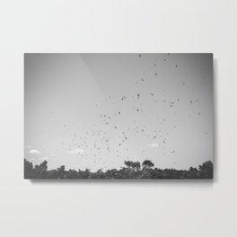 Kite Hawks  Metal Print
