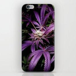 Purrple iPhone Skin