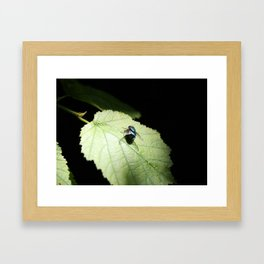Flies can be pretty too Framed Art Print