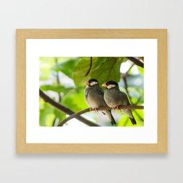 Birds Cuddling Framed Art Print