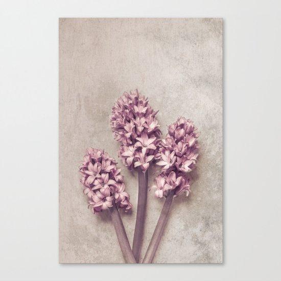 Lovely pink Hyacinths Canvas Print