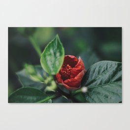 Deep Red Canvas Print