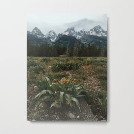 Yellow Flowers, Grand Teton National Park, Wyoming Metal Print