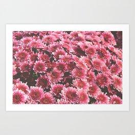 Chrysanthemum Autumn Flowers Photography Art Print