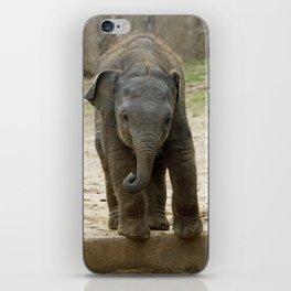 Elephant_20171101_by_JAMFoto iPhone Skin