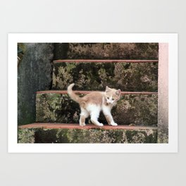 Cute Kitten Playing on the Stairs Art Print