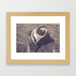 Adorable African Penguin Series 3 of 4 Framed Art Print