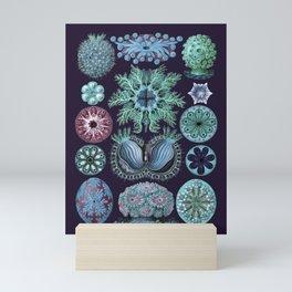 Ernst Haeckel Ascidiae Sea Squirts Teal on Purple Mini Art Print
